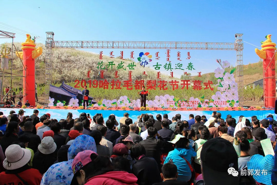 2019哈拉毛都梨花节精彩启幕