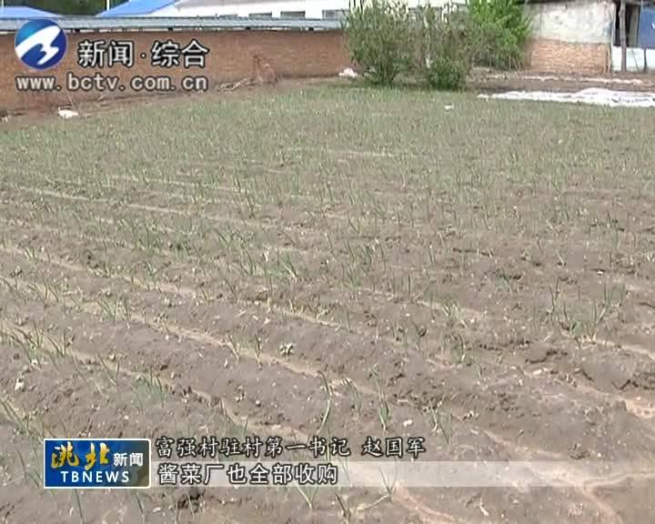 5月29日洮北新闻