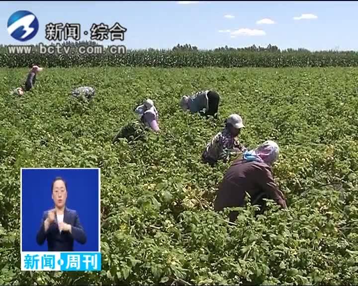 2019.8.18白城新闻周刊