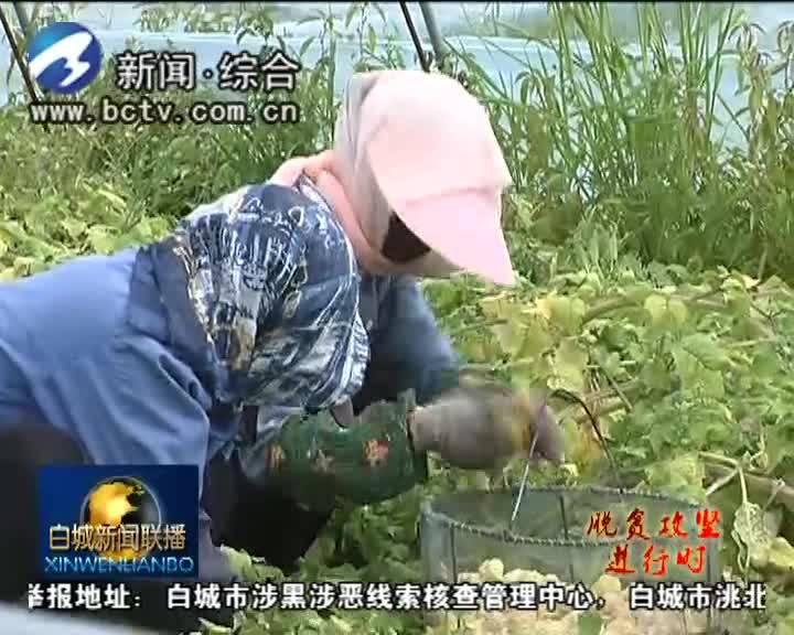 《脱贫攻坚进行时》发展特色产业 促进农民增收