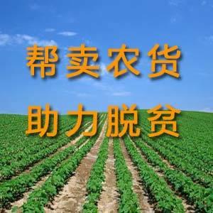 帮卖农货 助力脱贫