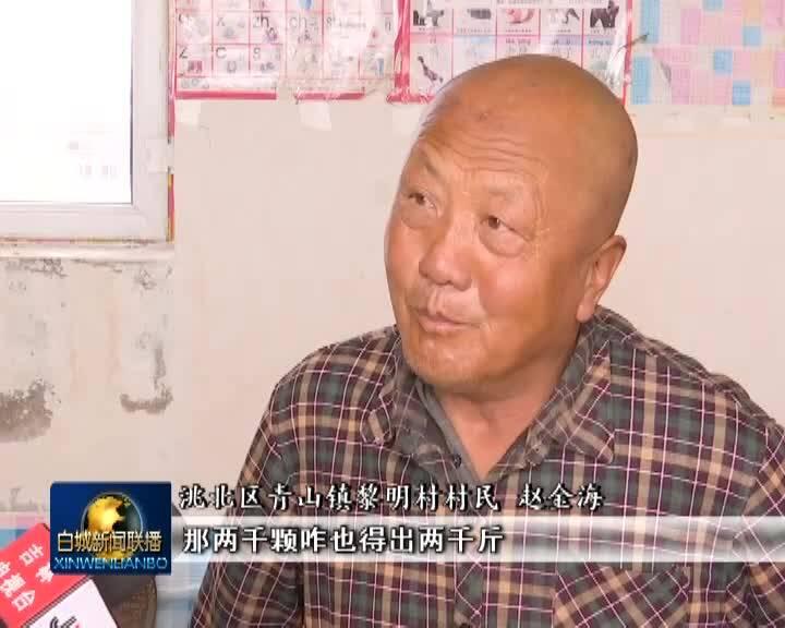 《决战决胜脱贫攻坚》专栏洮北区:红辣椒串起红火日子