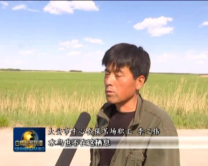 《新时代 新作为 新篇章——在习近平新时代中国特色社会主义思想指引下》绿色为底 生态为色 美丽家园 大美白城