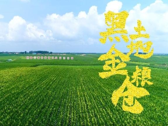 习近平吉林行丨首站来到梨树县国家绿色玉米生产基地