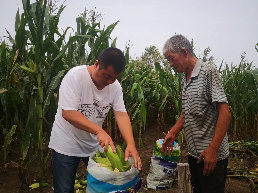 【决战决胜脱贫攻坚】扶贫玉米获丰收 包保干部助销售