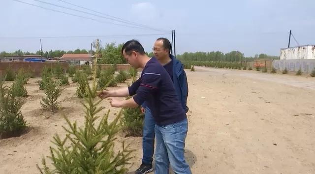 前郭县长龙乡国土绿化效果显著