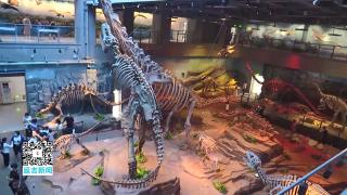 端午假期 延吉恐龙博物馆接待游客6000余人次