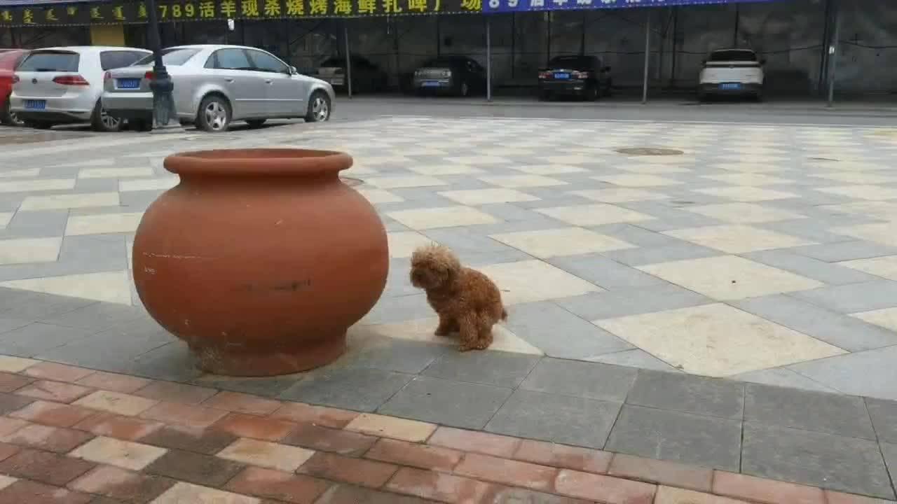 【创文明城市 做有礼前郭人】文明养犬 共建和谐社区