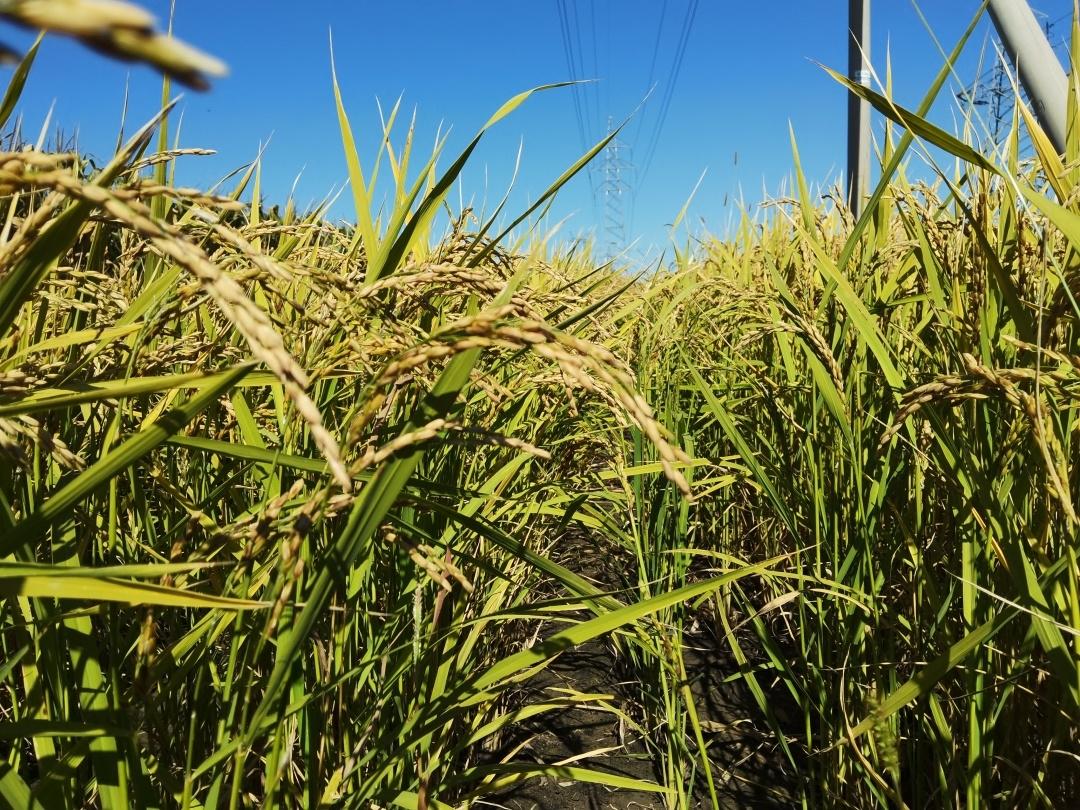 吉林省农作物新品种引育中心在前郭县开展国内外优异种质资源引进与创新培训班