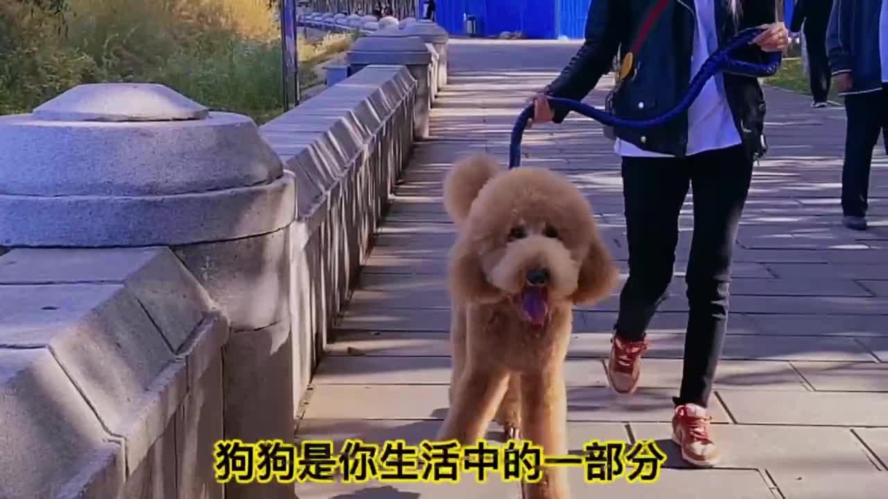 【创文明城市 做有礼前郭人】文明养犬从我做起!
