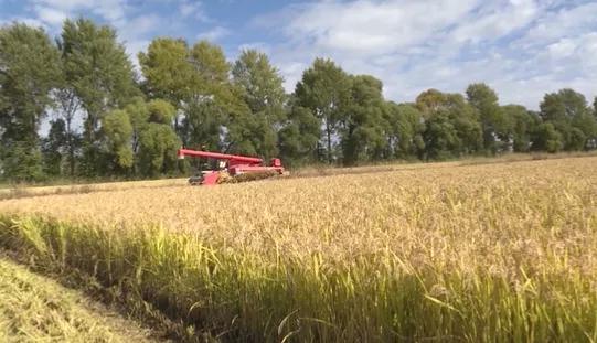 前郭灌区国营红光农场水稻喜获丰收