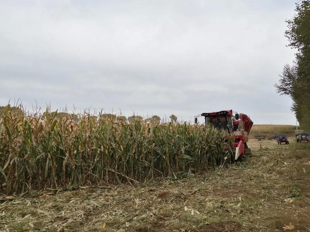 前郭县吉拉吐乡玉米、水稻喜获丰收