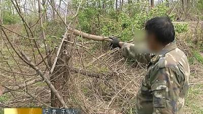 林业局严厉打击滥砍滥伐、侵占林地等涉林违法行为